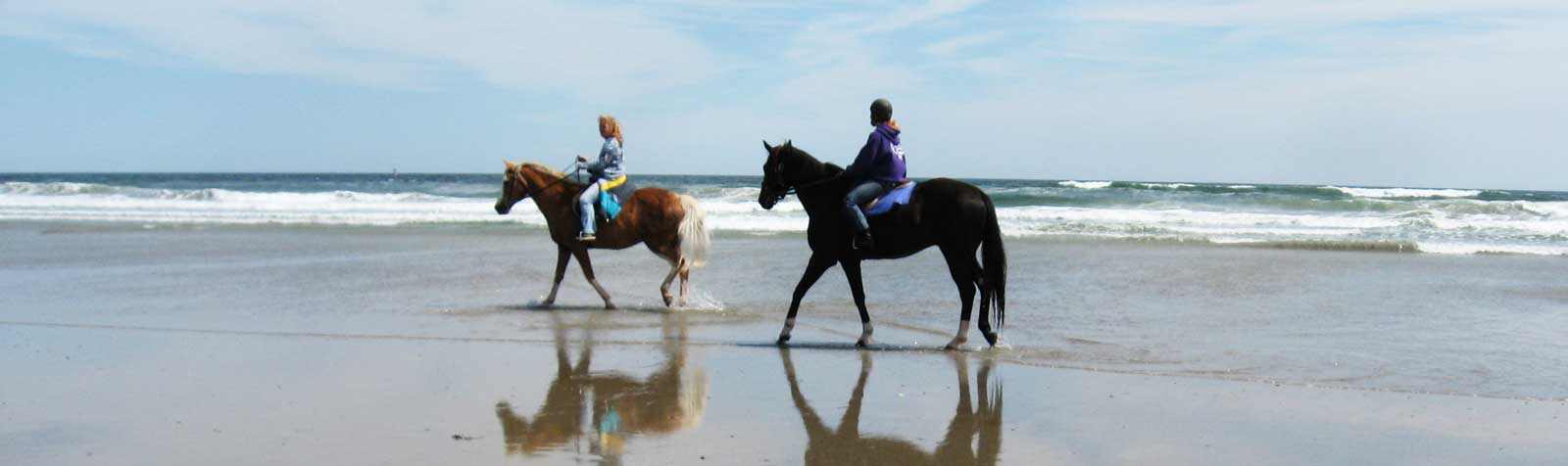 Race Horses Rescue Maine