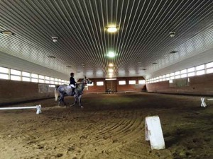Kippy dressage test
