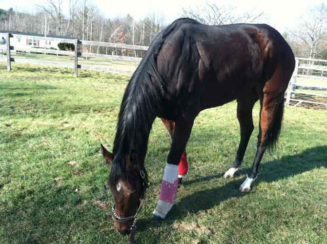 Reine's cast is off