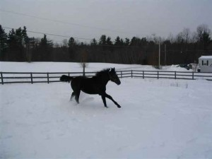 Kippy running in the snow