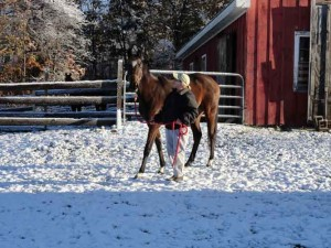 Little Filly questions snow