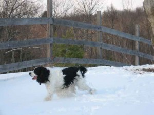 Monroe running the fence line